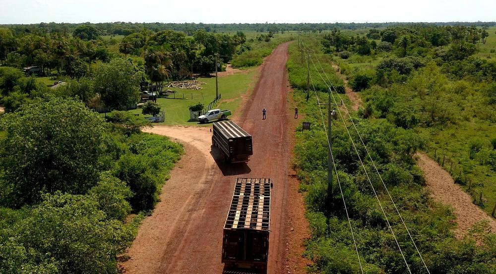 Gado chegando ao leilão de carreta, pela MS-228 cascalhada: Governo Estado leva logística ao Pantanal - Foto: Chico Ribeiro