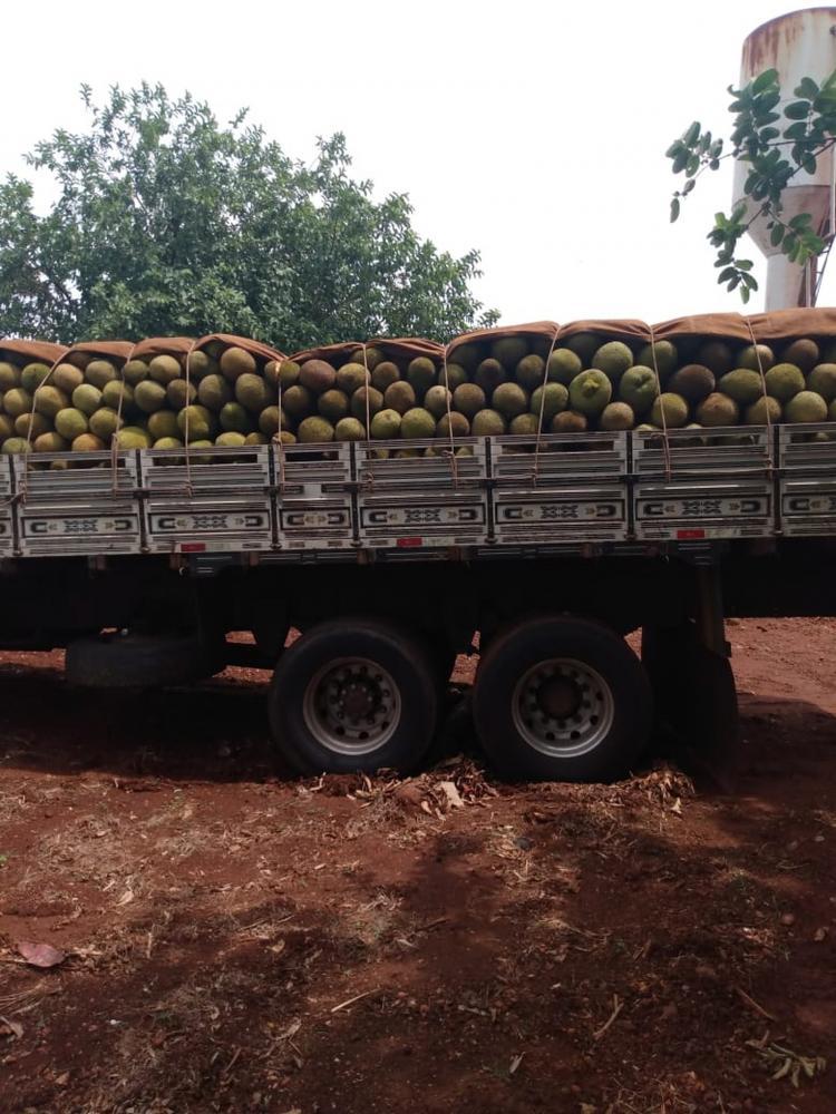 Cerca de 125 tabletes de maconha foram encontrados escondidos em carga de caminhão. — Foto: Porã News