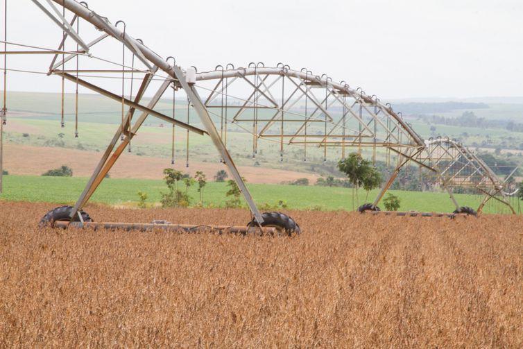 Produção de grãos da safra 2019/2020 será recorde, indica estimativa da Conab - Foto: Tony Oliveira/CNA/Direitos Reservados