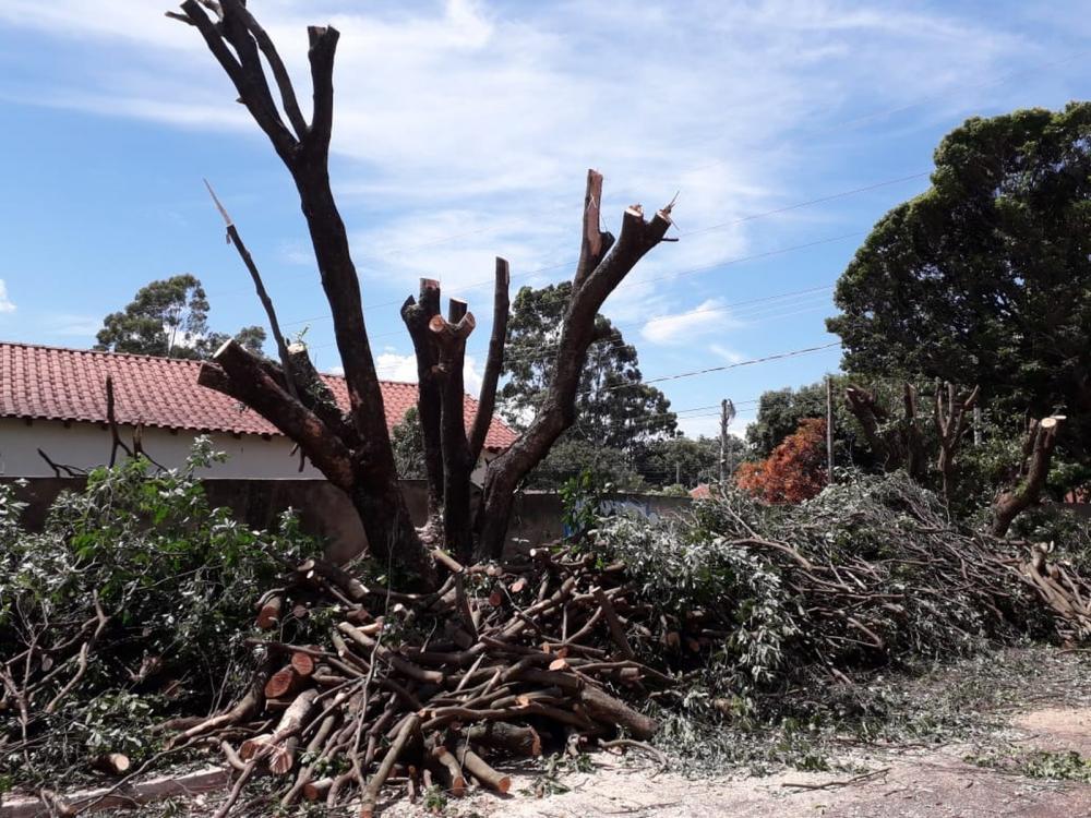 Árvores podadas ilegalmente em Campo Grande — Foto: Osvaldo Nóbrega/TV Morena