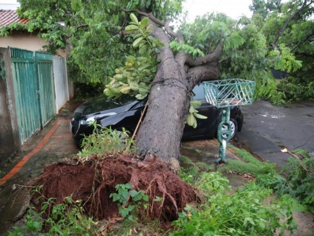 Carro atingido por árvore não tinha seguro (Foto: Marcos Maluf)