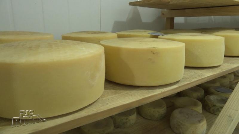 Casal de Londrina se destaca com a produção de queijos especiais