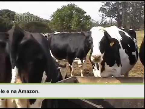 Tecnologia para o pequeno produtor de leite